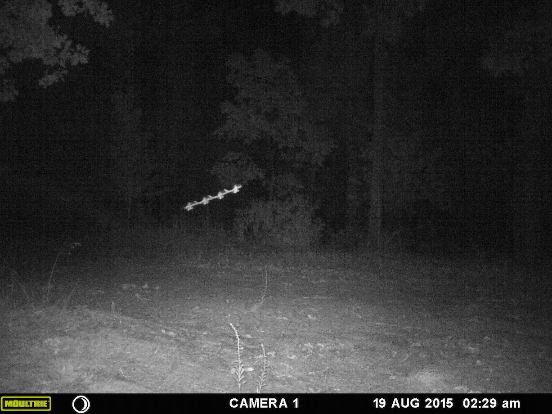 Летающий стержень снят камерой ночного видеонаблюдения.
