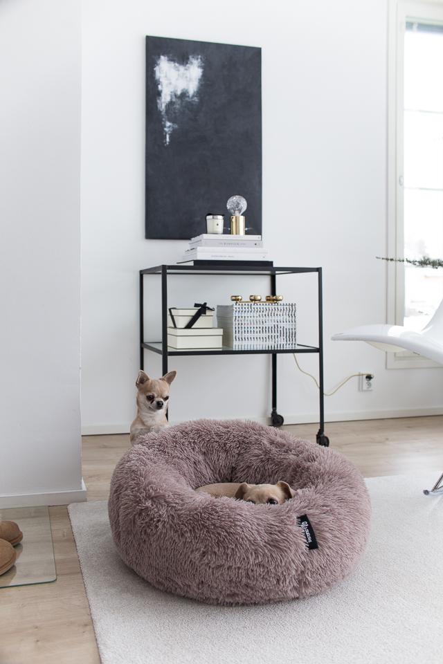 Villa H, chihuahua, koirat, koiran peti, tyylikäs koiran peti
