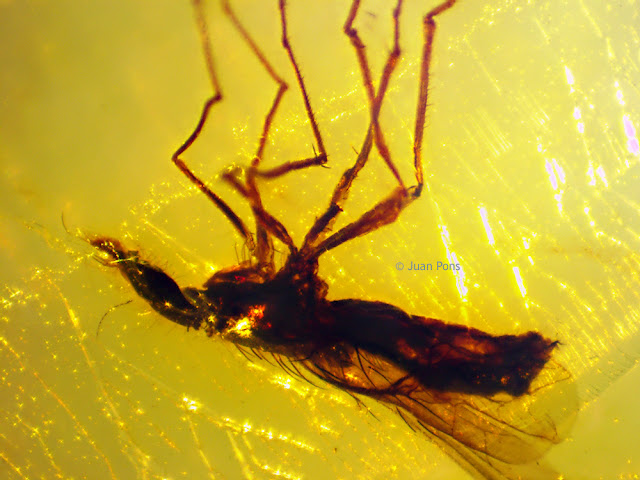 Amber captured at 90x under a macro zoom lens microscope.