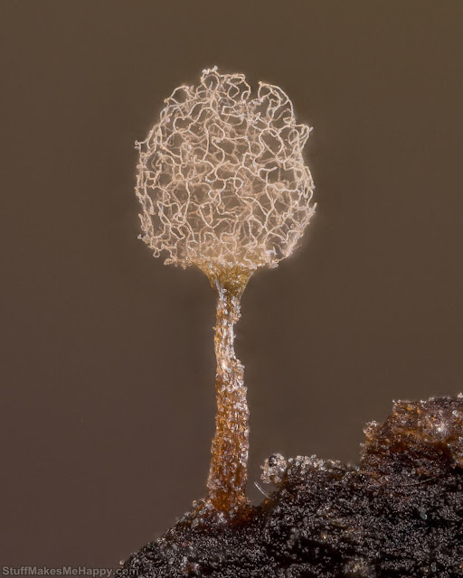 9. Slime mold. Photo by Alison K. Pollack