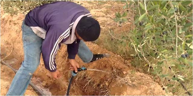 المهدية : يقطع عن جيرانه الماء لسقي حقل زيتون !