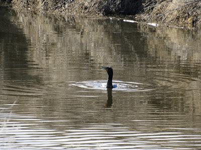 Lower Klamath National Wildlife Refuge northern California birding