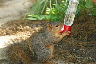 Makanan Untuk Tupai beserta Minumannya