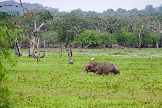 الحيوانات المهددة بالإنقراض