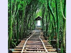 4 Tempat Wisata Keren di Jogja