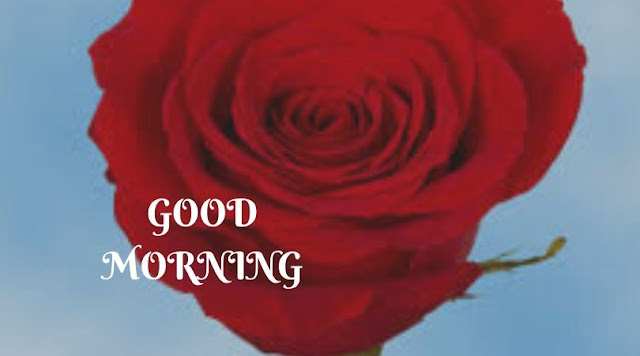 good morning rose and coffee images
