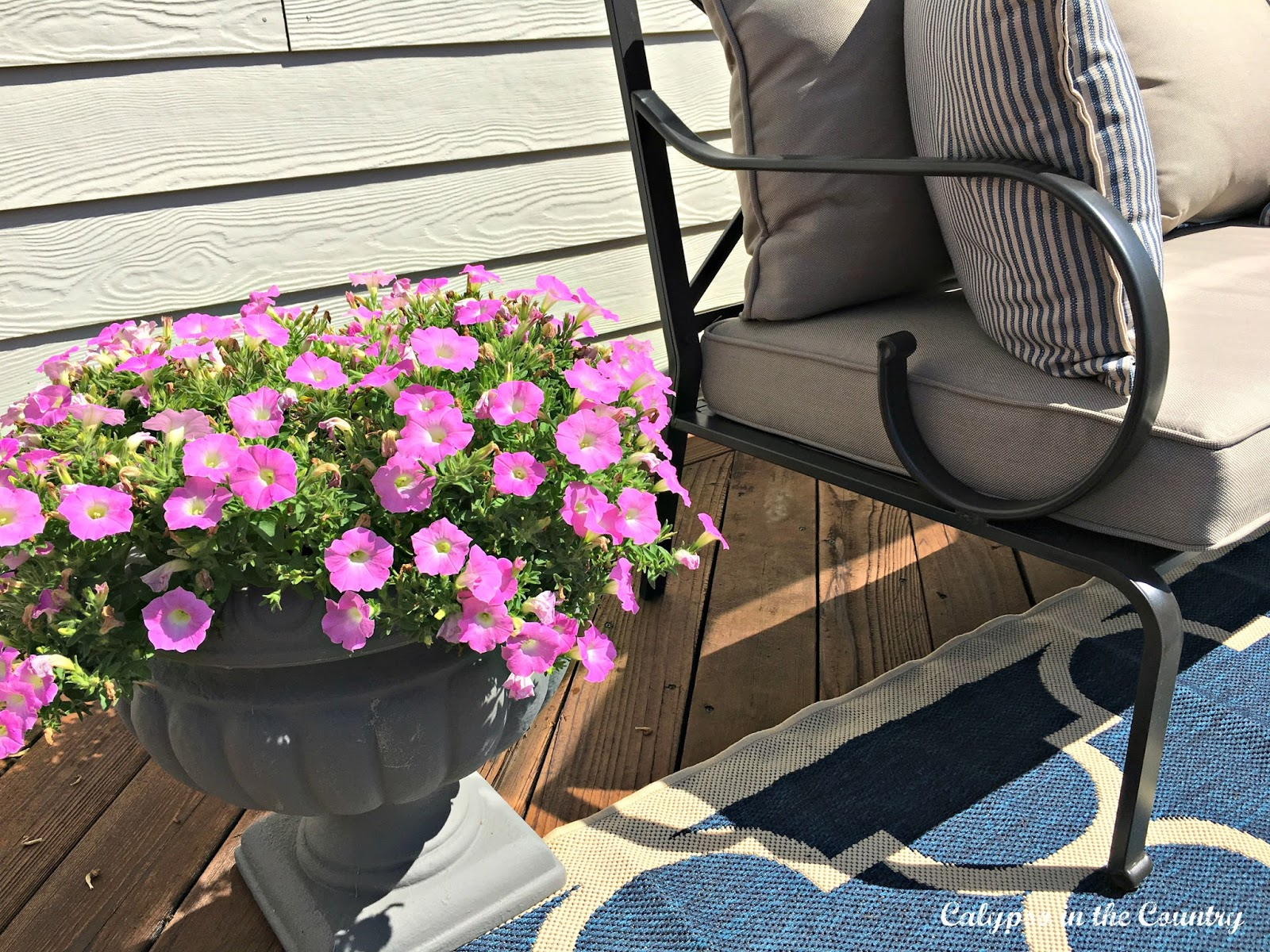 Petunias in outdoor urn
