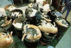 3/5/15 Some Cats and Dogs Are Gassed at Shelters. Others Given Lethal Injections. Watch Videos.