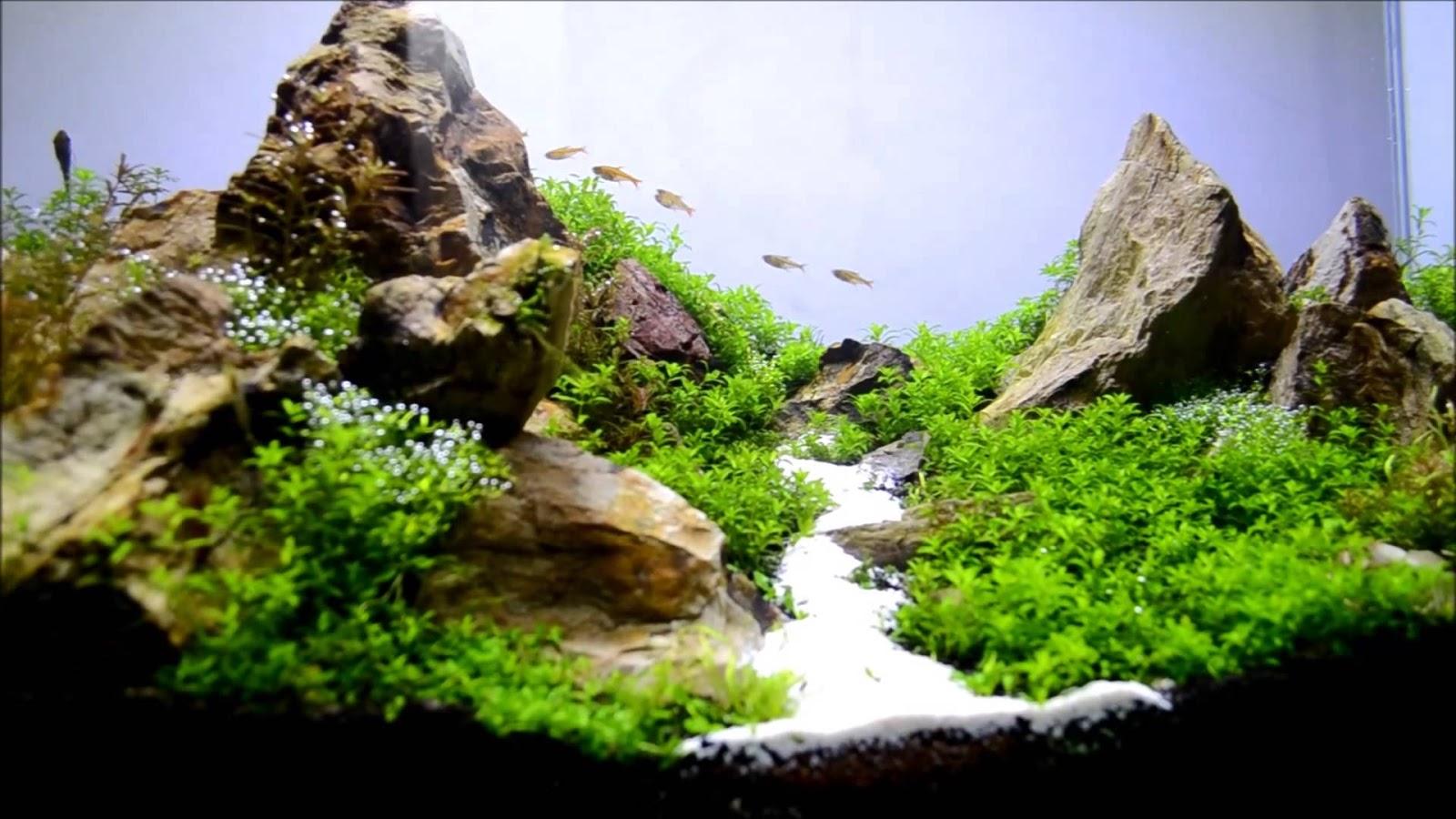 cát trắng tăng vẻ đẹp tinh khiết nhưng không kém vẻ tự nhiên cho hồ thủy sinh
