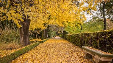 El Botánico de Madrid pone las hojas de otoño a tus pies