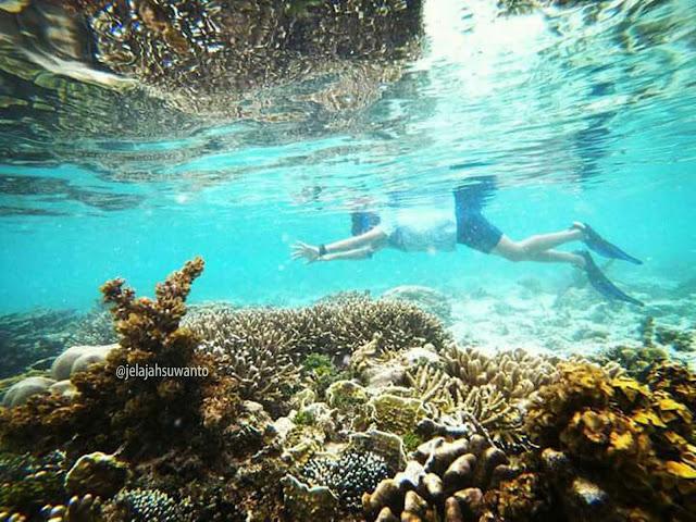 Snorkeling di perairan dangkal di muka Batu Lima Homestay Raja Ampat ⒸJelajahsuwanto