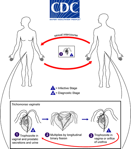 Most infected women at the acute stage are asymptomatic or have a scanty, watery vaginal discharg