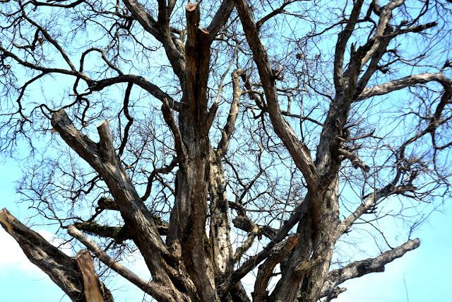 http://tipspetani.blogspot.com/2016/11/cara-mudah-membunuh-pohon-tanpa-harus.html