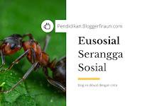 Eusosial : Pengertian Serangga Sosial, Lengkap!