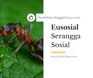 pengertian serangga sosial