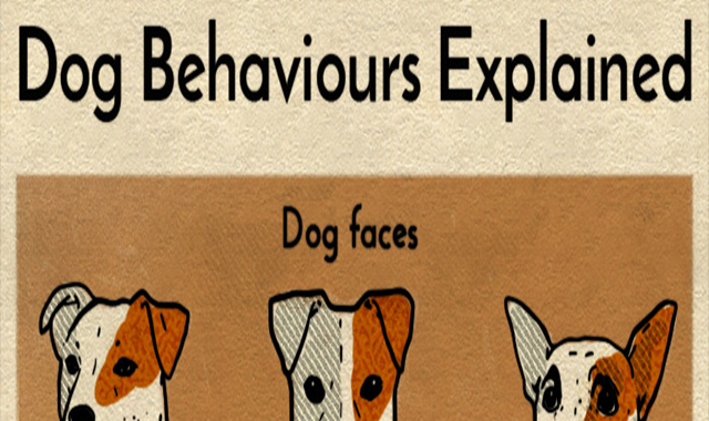 Dog behaviours explained #infographic