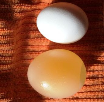 cara membuat telur karet