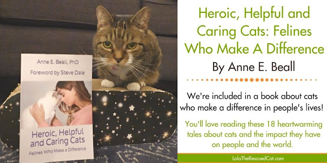 Heroic, Helpful and Caring Cats