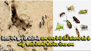 Interesting Facts About Ants In Gujarati