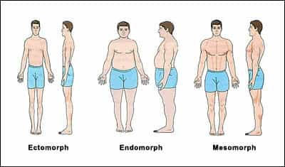 What Your Body Type Needs – What Is My Body Type