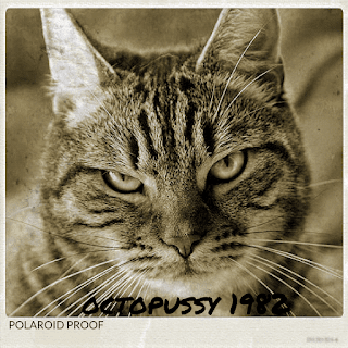A polaroid picture of Octopussy Grump the pussy kitty in 1982
