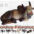 Forma / Molde Fibra Vidro Fazer Boi Modelo 01