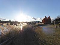 打上川治水緑地 太陽 すすき メタセコイアの紅葉