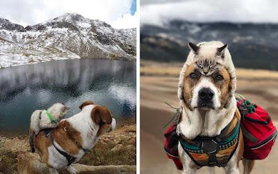 Este perro y gato son mejores amigos y están viajando por el mundo juntos