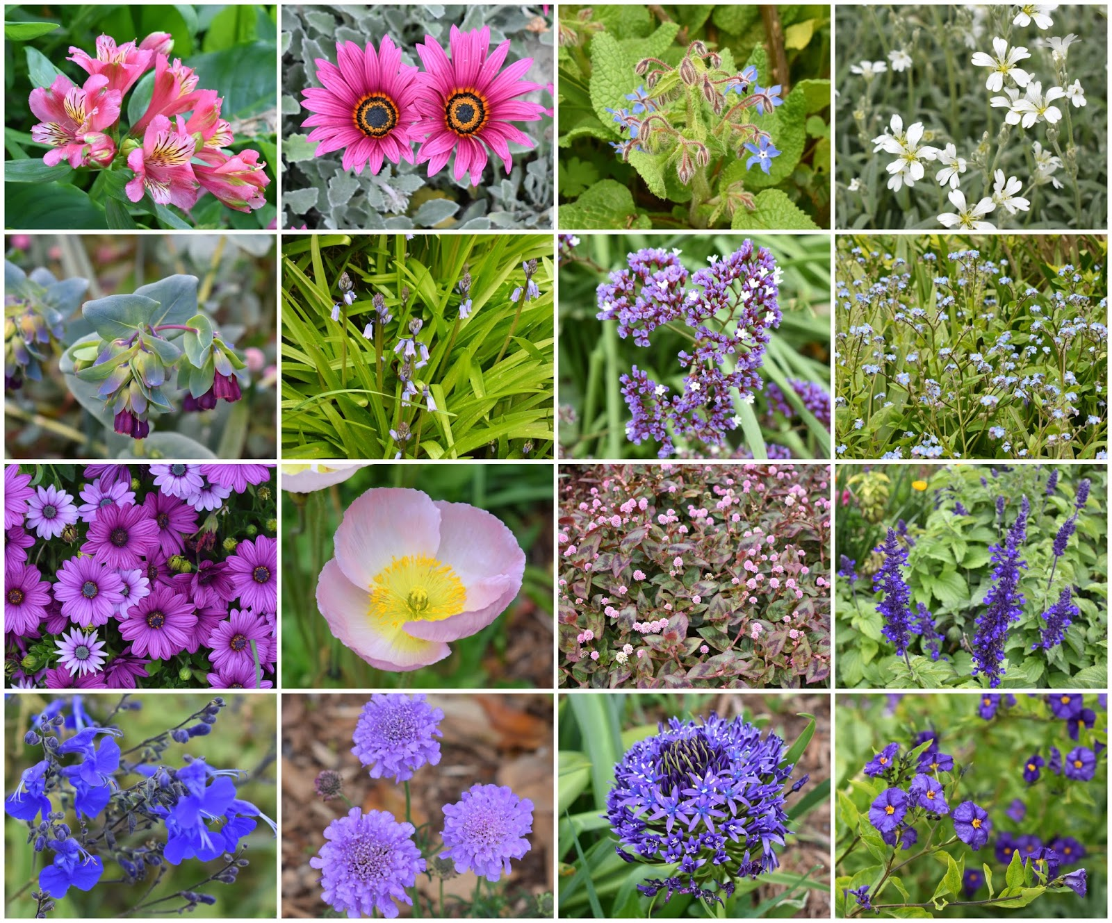 Late to the garden party local spring flower fest 2nd row cerinthe honeywort hyacinthoides spanish bluebells limonium perezii sea lavender and myosotis forget me nots izmirmasajfo