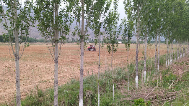 Farming in the fields of Batken region continues, despite a shortage of water for irrigation (Image: The Third Pole)
