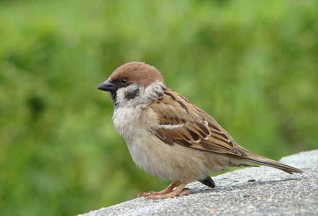 Birding Taiwan Idiots Guide