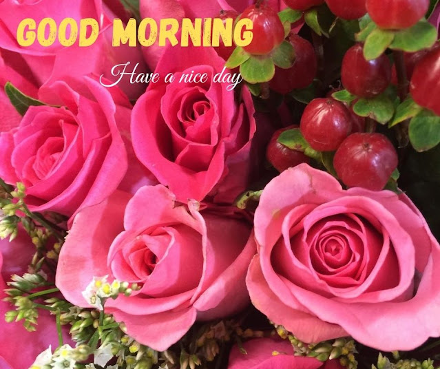 flower photos for good morning