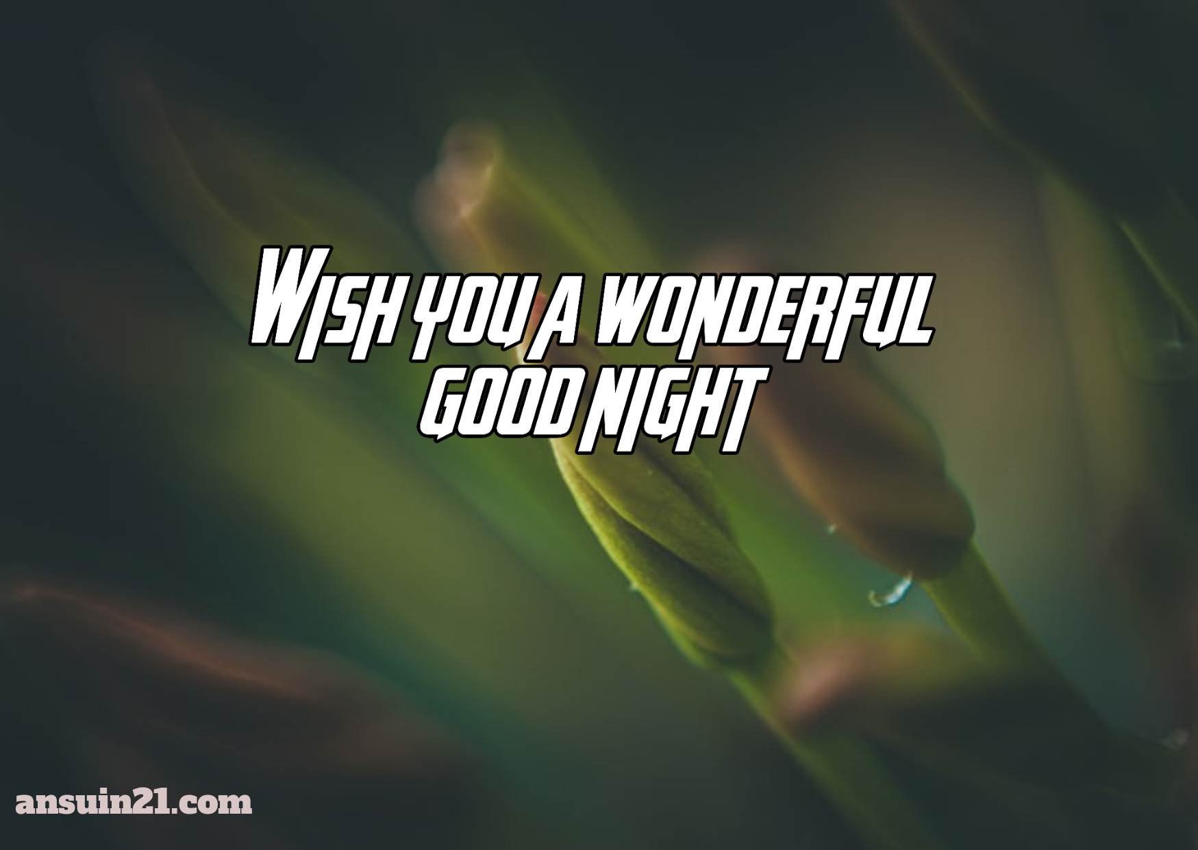 Best Beautiful Good Night Images, Status, Wishes, Massage