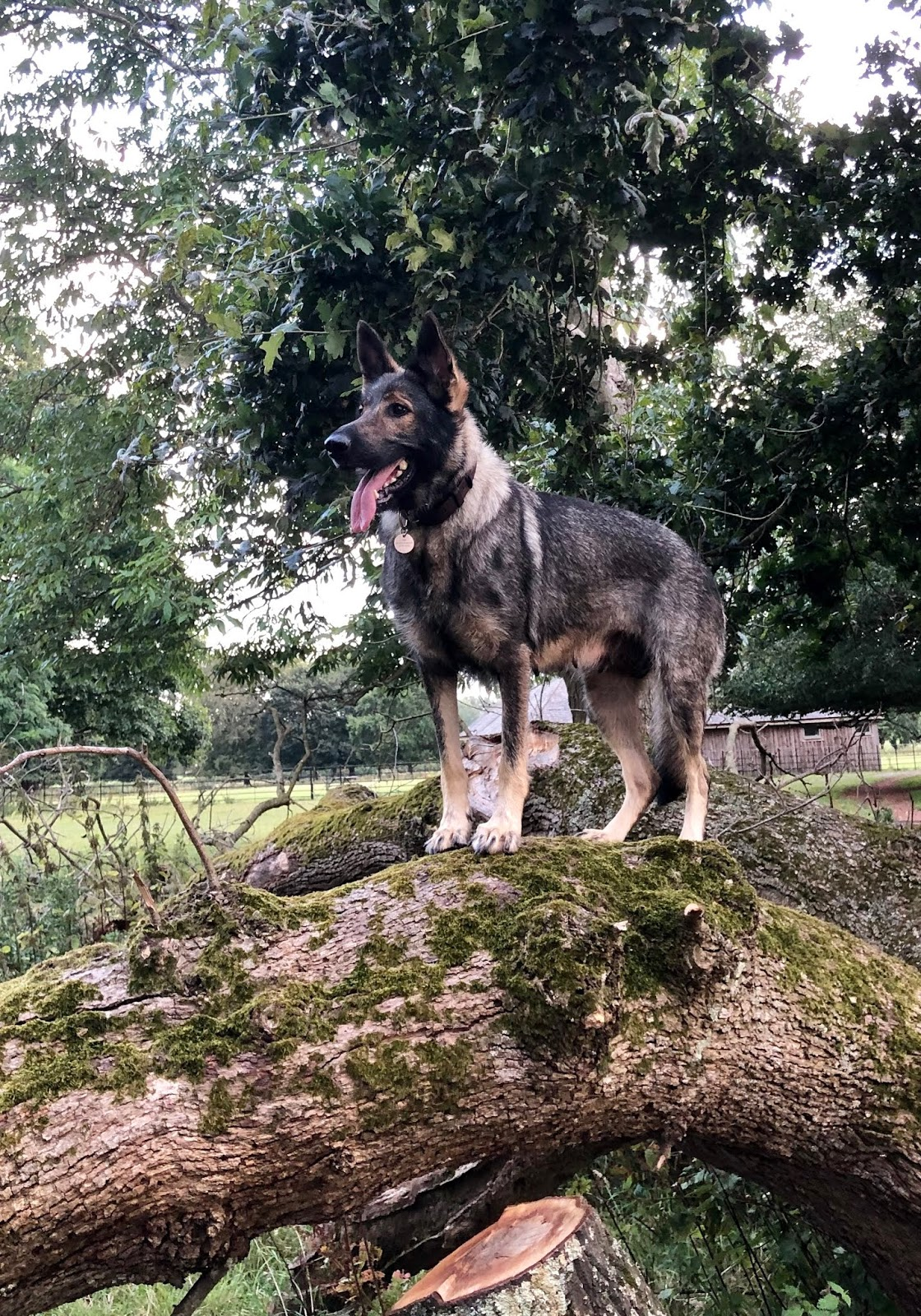 Cornwall, Devon and Dorset Police Dog Section: A day in the