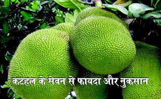Jackfruit consumption can also be harmful to many people's health in hindi,katahal ke sevan se fayda kam nuksan jyada na ho jae in hindi,कटहल के सेवन से फायदा कम नुकसान ज्यादा न हो जाए hindi,  Jackfruit advantages & disadvantages in hindi, kathal ke fayde in hindi, kathal ke barein mein in hindi, kathal ke nuksan in hindi, jackfruit in hindi, jackfruit in hindi recipe in hindi, kathal ki sabji in hindi, कटहल का सेवन कई लोगों के स्वास्थ्य के लिए भी हानिकारक हो सकता है in hindi, (Jackfruit consumption can also be harmful to many people's health in hindi,) इसके साथ कई चीजों के साथ इसका कॉम्बिनेशन करना खतरनाक हो सकता है in hindi, कटहल कई औषधीय गुणों से भरपूर है in hindi, कटहल का वानस्पतिक नाम आर्टोकार्पस हेटेरोफिल्लस है in hindi, कटहल में कई पौष्टिक तत्व पाए जाते हैं in hindi, जैसे विटामिन ए, बी, थाइमिन, पोटैशियम, कैल्शियम, राइबोफ्लेविन, आयरन, नियासिन और जिंक. इसमें खूब सारा फाइबर भी पाया जाता है in hindi, दूध  का सेवन in hindi, खाना खाने के बाद या पहले दूध का सेवन जरूर करते हैं in hindi, अगर आपने कटहल खाने के एक घंटा पहले दूध का सेवन किया हो तो इसका सेवन न करें in hindi, क्योंकि दूध और कटहल एक साथ मिलकर रिएक्शन करते हैं in hindi, जिससे स्किन संबंधी कई समस्याओं का सामना करना पड़ सकता है in hindi, दाद, खाज, खुजली, एग्जीमा, सोरायसिस जैसी समस्या हो सकती है in hindi, पका कटहल in hindi, पका कटहल कटहल कफवर्धन होता है in hindi, ऐसे में अगर पका हुआ कटहल का ज्यादा सेवन कर लिया तो आपको पेट फूलने के अलावा खांसी, सर्दी-जुकाम की समस्या हो सकती हैं in hindi, प्रेग्नेंसी in hindi, कटहल में अघुलनशील फाइबर पाया जाता है in hindi, जो मां और होने वाले बच्चे के लिए खतरनाक हो सकता हैं in hindi, क्यों कि यह जल्दी घुलता नहीं है। प्रेग्नेंसी या फिर जो  महिलाएं बच्चे को दूध पिलाती हैं in hindi, वो कटहल का सेवन न करें in hindi, पित्त की समस्या in hindi, जिन लोगों को पित्त अधिकता की समस्या हैं in hindi, वह लोग तो बिल्कुल भी कटहल का सेवन न करें in hindi, अगर सेवन कर लिया हैं तो खाकर कुछ देर आराम जरूर करें in hindi, कटहल के फायदे in hindi, (Benefits of Jackfruit in hindi) दिल को रखे सेहतमंद in hindi