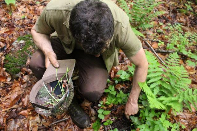 foraging / mencari makanan di alam liar