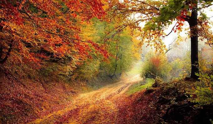 ¿Cómo comenzar bien el otoño para todos los signos del zodíaco?