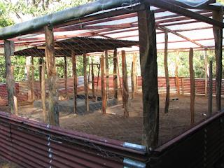 chicken paddock