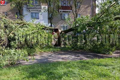 Минск. Дерево разломанное ураганом 13 июля