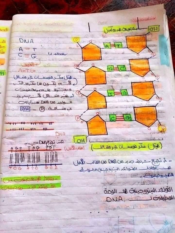 اقوي ملخص DNA تالته ثانوي 12