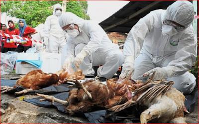 Bird Flu, Pest Control, News, Health, Nigeria,