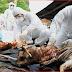 Bird Flu returns to 7 states in Nigeria - Federal Government warn Citizens