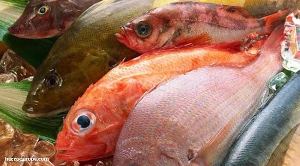 Cara Mimilih Ikan Laut yang Masih Segar