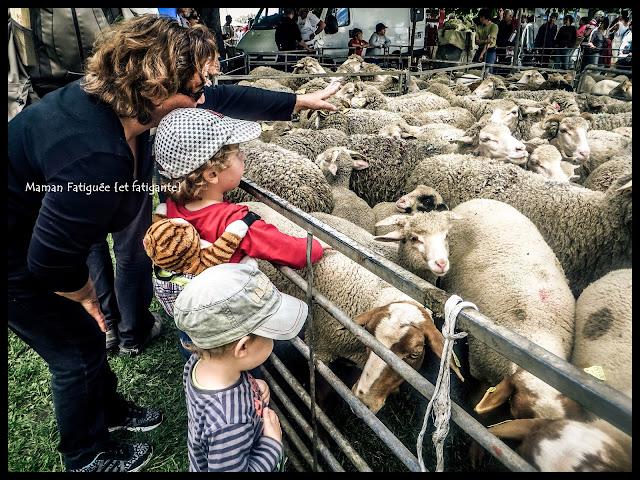 moutons foire agricole