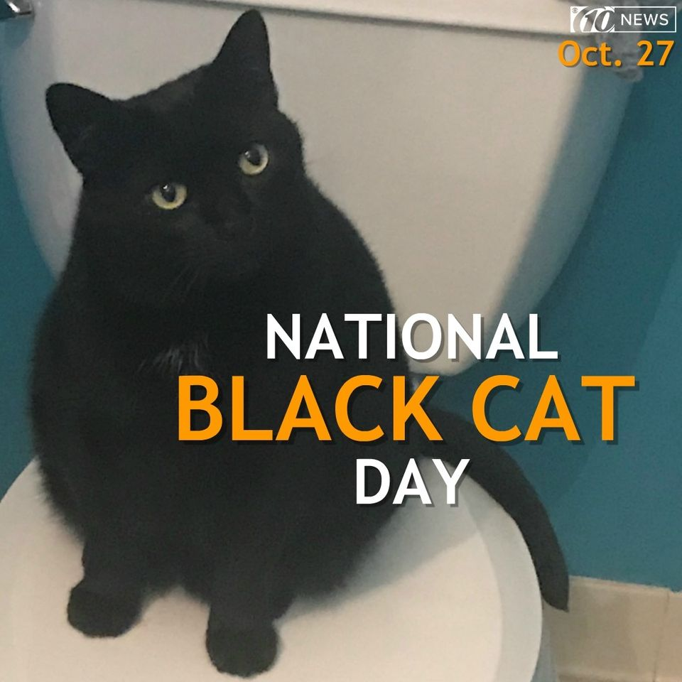 National Black Cat Day Wishes pics free download