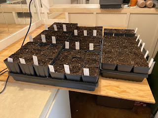 More Seeds Have Been Started