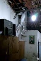 Jumento cai em telhado de residência e causa apreensão no interior da Paraíba; veja vídeo