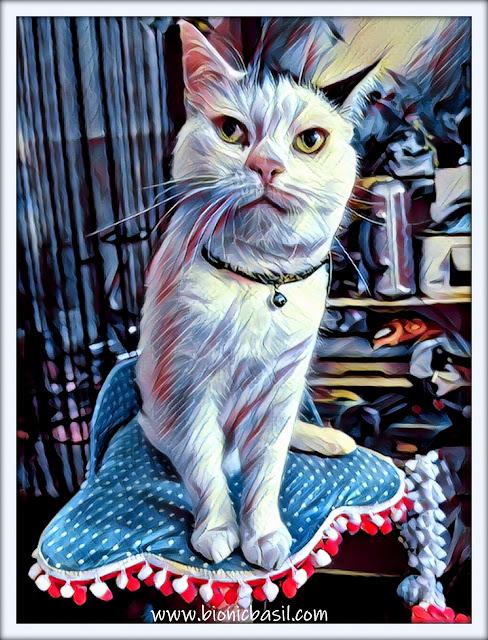 Smooch's Office Selfie ©BionicBasil® Caturday Art