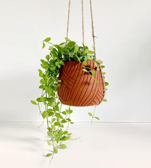 Tanaman Hias Gantung yang Cocok untuk Dekorasi Hunian Rumah Minimali