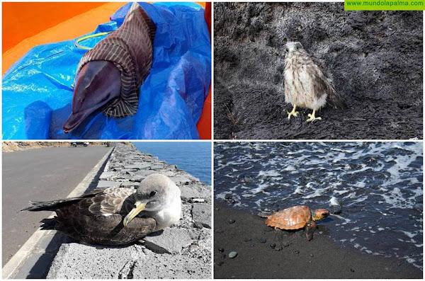 El Centro de Rehabilitación de Fauna Silvestre atendió a 227 ejemplares en 2020
